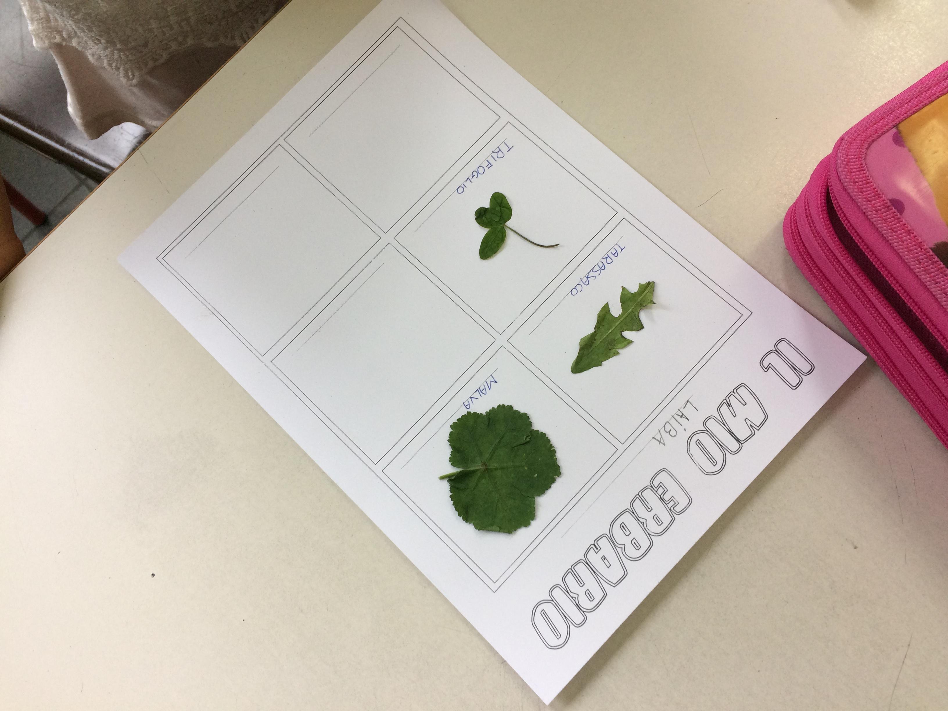 Come Costruire Un Erbario il mio erbario - maestramarta